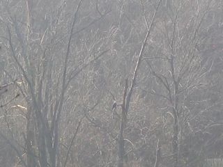 Branson condo photo - Can you see the Bald Eagle?