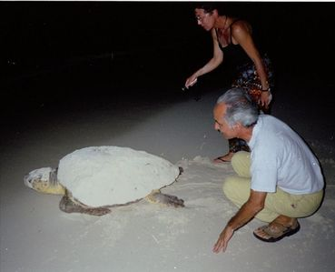 Guests Watching Turtle Return to the Sea
