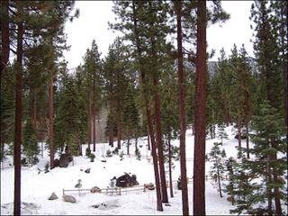 Tahoe Valley condo photo - Tranquil Wooded Surroundings