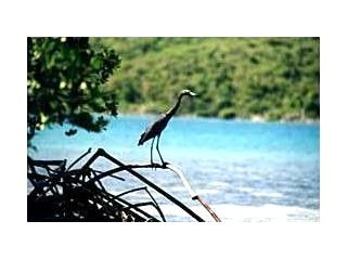Culebra villa photo - Blue Heron Wild Life Protected Species on Secluded Nearby Cays..