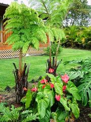 Pahoa house photo - Tropical Garden with Tropical Flowers.