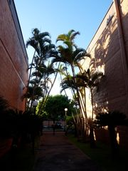 Lahaina condo photo - Enter gardens thru palm archways..