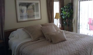 Palm Coast house photo - Master Bedroom (Tan Zebra Design)