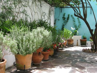 In San Miguel, the garden blooms twelve months a year