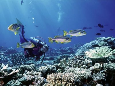 Belize, the place to be for diving and snorkeling