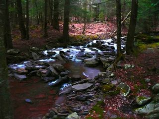 Tannersville farmhouse photo - The Stream.