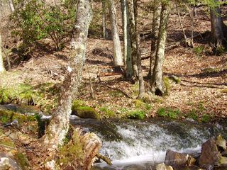 Maggie Valley cabin photo - View of waterfall from front deck, notice the little bench near the creek