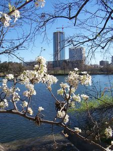 Enjoy a walk along Lady Bird Lake