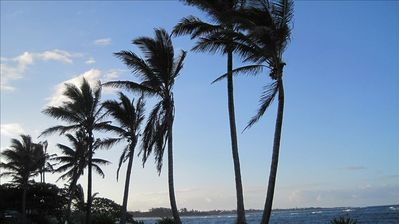 View of the coconut trees that line the shoreline behind the home.