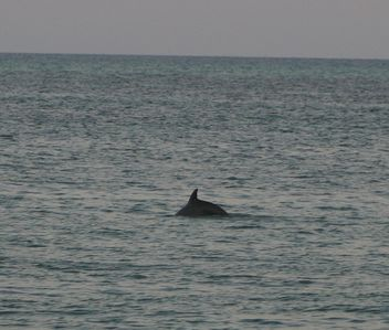 #1 Rule: Always have your camera at the beach. This dolphin was 20 yards away.
