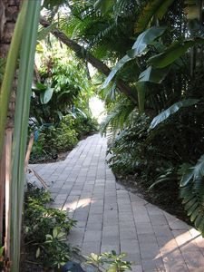 At spinnakers you are surrounded by luch tropical foliage year round!