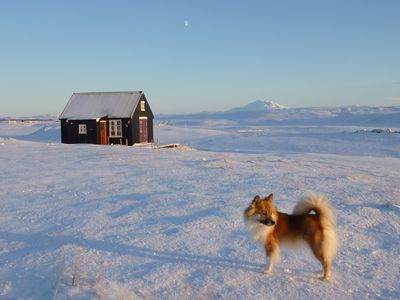 South Iceland house rental - 'Winterland' and icelandic sheepdog 'Skinna'