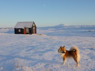 'Winterland' and icelandic sheepdog 'Skinna'
