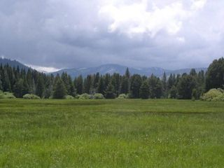 Meadow on the Upper Truckee River, just a short walk from the house
