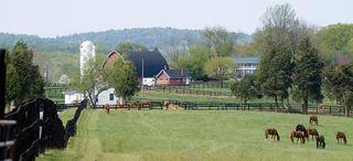 Charlottesville farmhouse photo - View of Manor House and Main Barn; This Farm is Huge!