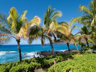 Kealakekua Bay house photo - Swaying palms in the ocean breeze