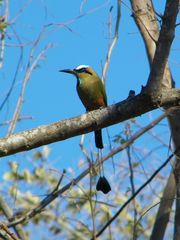 Playa Ocotal condo photo - Motmot