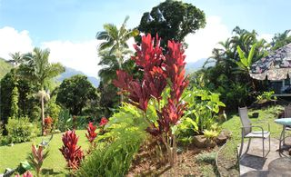 Wainiha house photo - vivid colors, plants on fire, you will feel like you're in a dream!