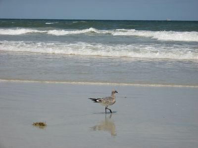 Our beach area is restful,  not crowded, enjoy the 'locals' on and offshore.