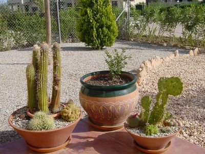 Garden feature - potted cacti