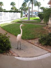St Pete Beach condo photo - Great White Heron