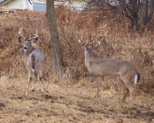 Keokuk cabin photo - Bucks