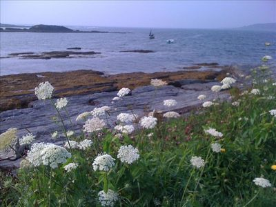 Queen Anne's Lace at Kettle Cove