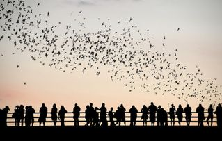 Austin house photo - Watch the bats emerge at sunset from Congress Avenue bridge over Lady Bird Lake.