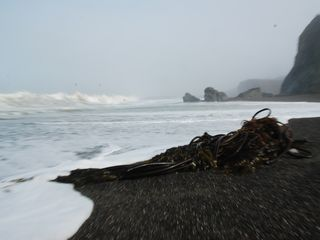 Russian River house photo - Surf on a foggy fall day at Goat Rock State Beach (25 minutes drive)