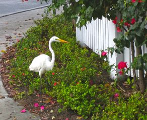 Key West condo photo - We have a Visitor.