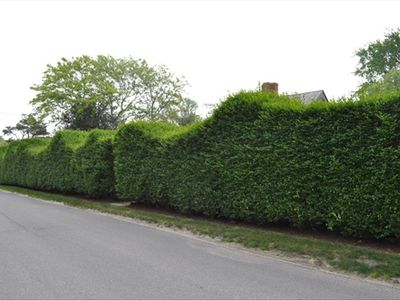 Serpentine hedge on W Chester St.