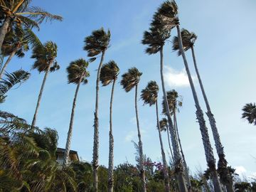 Tall palm trees surrounds the yard and house. Trade winds keep house cool always