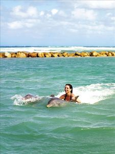 Swimming with the Dolphins available at additional cost