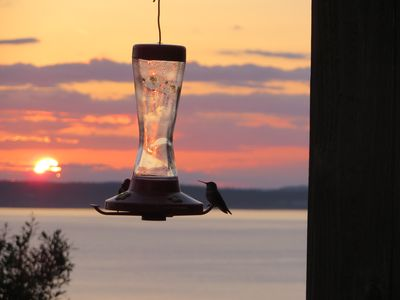 Hummingbirds love the view too!