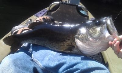 one of several monsters caught August 2012