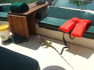 Islamorada house boat photo - Located in private marina hooked up to shore power and water. Relax and enjoy!
