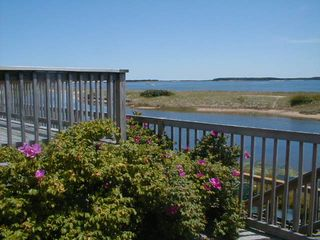 West Yarmouth condo photo - rosa regosa