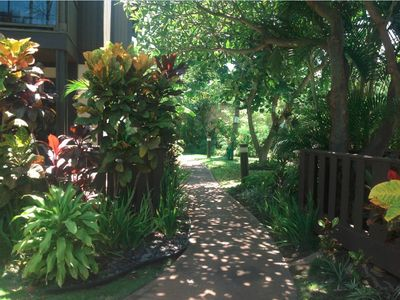Gorgeous Shady Paths