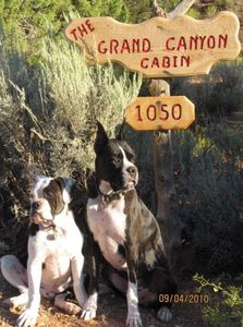 Recent guests Seamus & Dozer arrive at the cabin and give it 5 Paws!