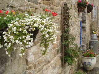 County Clare cottage photo - Summer blooms in courtyard