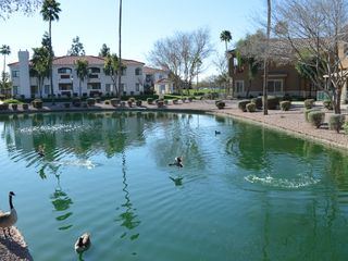 Mesa condo photo - Geese/Ducks in lakes around condo every day
