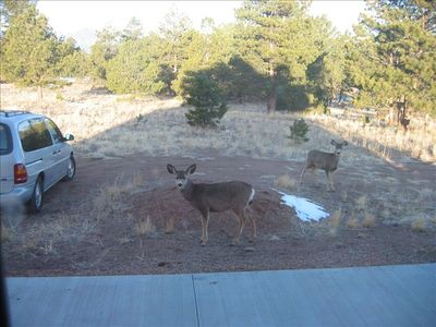 Deer and wildlife regularly visit your door.