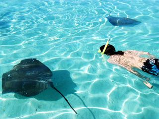 Encounter with the rays - Moorea bungalow vacation rental photo