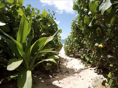 Your tropical pathway to the beach.