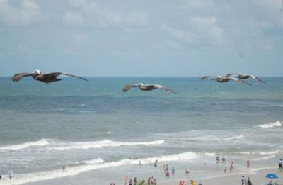 The pelicans fly right past your window. This picture taken from dinning area.