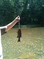 Carlisle cabin photo - One pound bass on Sherman Creek 2012.