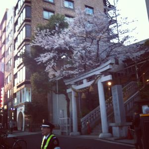 Azabu juban temple sakura (cherry blossoms) 2012
