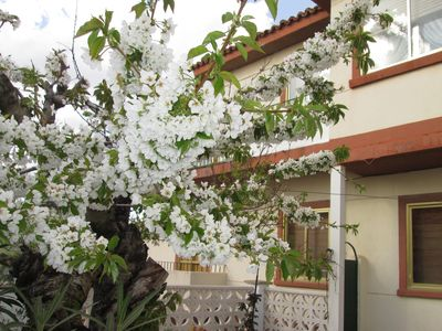 Spacious house in the center of Cuenca capital, with small garden, up to 6 adults