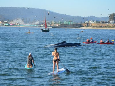 Nothing ordinary about whale watching in Santa Cruz!