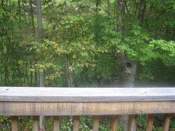 A view of the forest off the second floor deck.